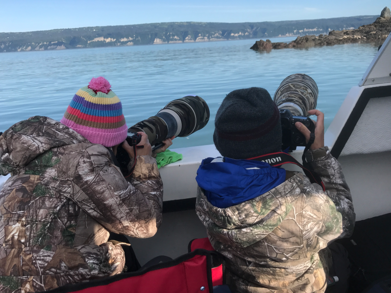 photographing seals