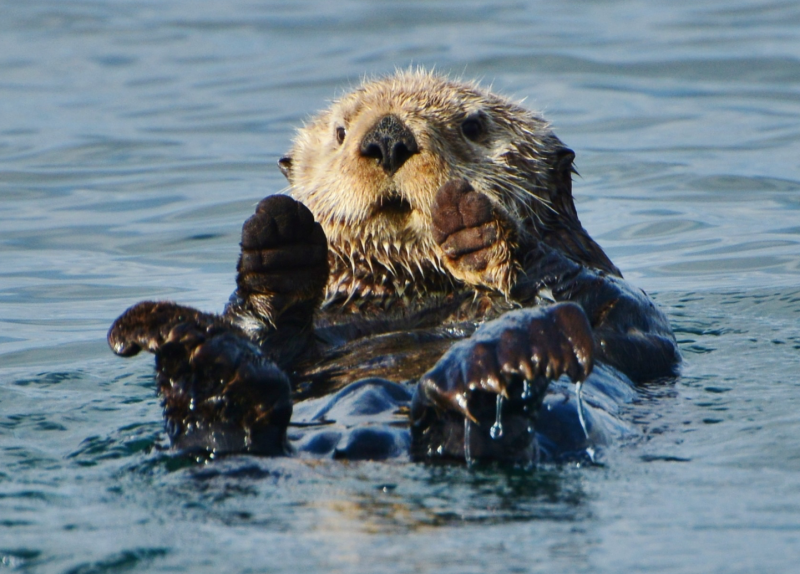 otter home page