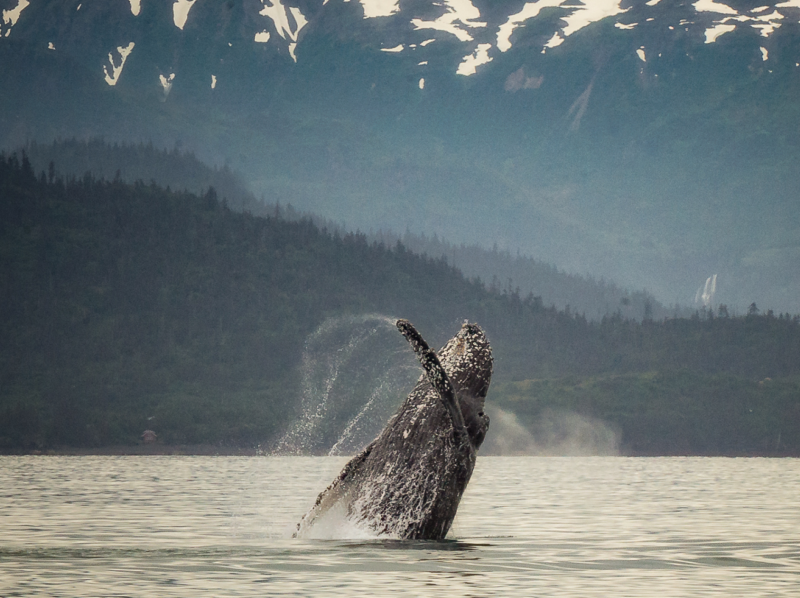 humpback home page