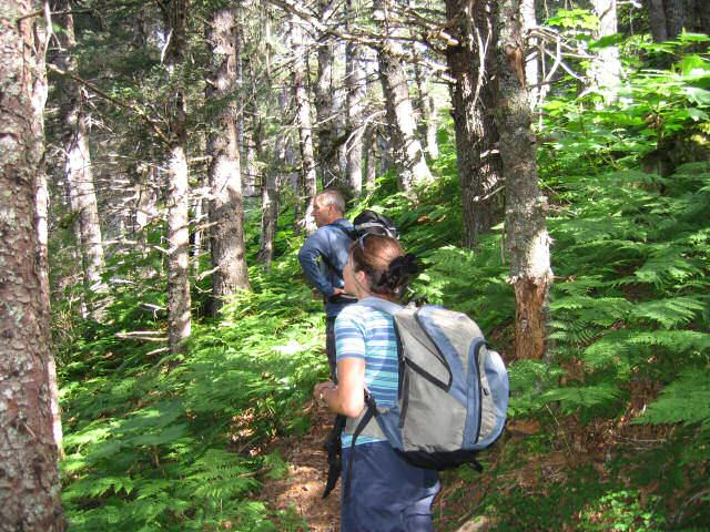 Kachemak Bay hiking offers hiking with beautiful forests and undergrowth